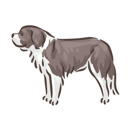 Cute dog St. Bernard breed pedigree vector illustration 向量圖像