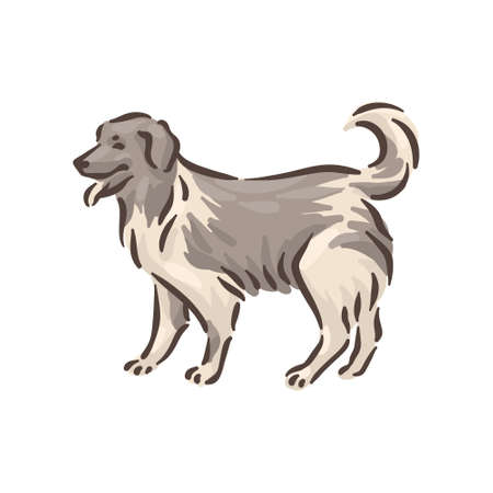 Cute dog Caucasian Shepherd breed pedigree vector illustration