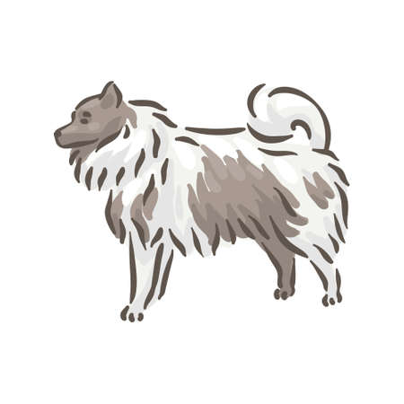 Cute dog Spitze breed pedigree vector illustration