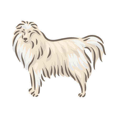 Cute dog Sheltie breed pedigree vector illustration