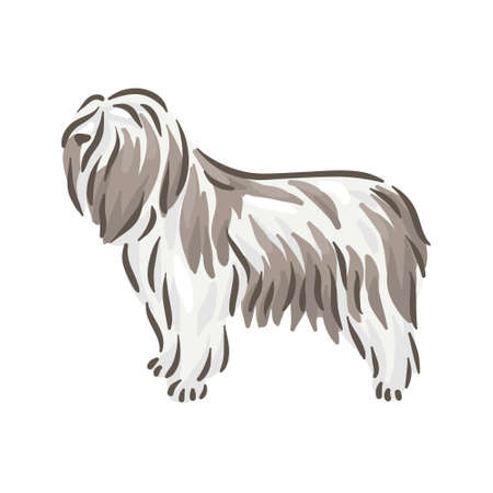 Cute dog Polski Owczarek Nizinny breed pedigree vector illustration 向量圖像