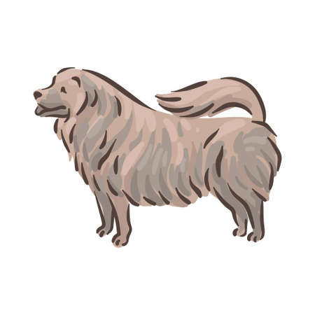 Cute dog Chow-chow breed pedigree vector illustration