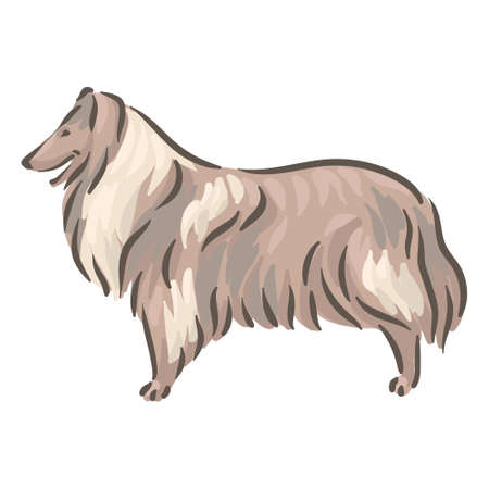 Cute dog Collie breed pedigree vector illustration