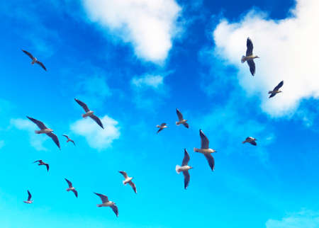 Flock of seagulls flying in the sky on a blue background