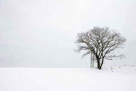wintriness: loneliness