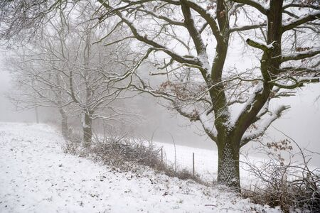 wintriness: winter Landscape with trees, fog and snowfall