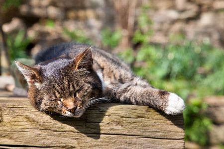 cat carrier: sleeping cat on wooden table in sunlight
