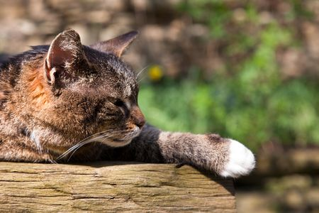 sleeping cat on wooden table in sunlight photo
