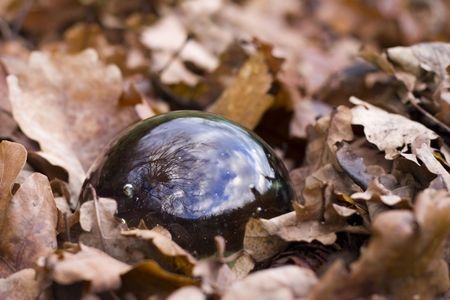 shere: crystal ball in autumn foliage at forest soil Stock Photo