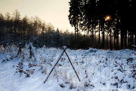 winter forest landscape with snow and sunrise photo