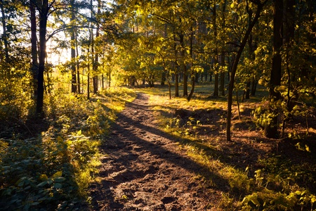 road autumnal: idyllic forest in autumn mood for a sunset