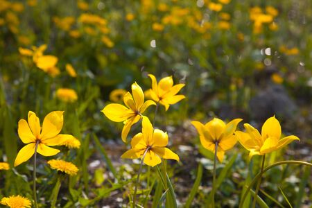 frhling: Macro to a Iris pseudacorus flower, also called yellow flag Stock Photo