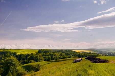 Summer Landscape near Kahla with cows, Thuringia Stock Photo - 17031888