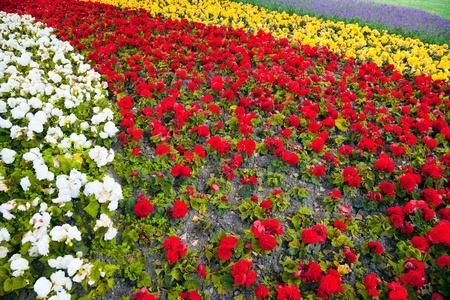 bloomy: sea of flowers - bloomy curves at springtime