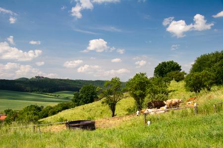 summer Landscape Unterbodnitz with castle Leuchtenburg on horizon and cows on the meadow photo
