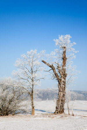 orla: Winter landscape with trees