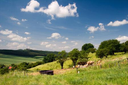 kine: summer Landscape  Stock Photo
