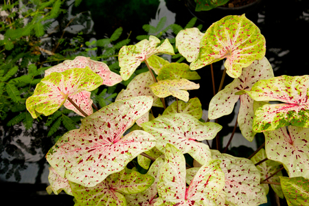 bassin jardin: rares Lily pads dans un �tang de jardin Banque d'images