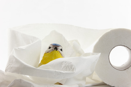 an artificial tit with toilet paper in front of white background photo
