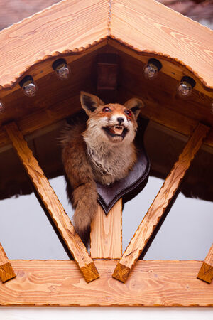 wooden hut: A stuffed fox at the entrance of a wooden hut