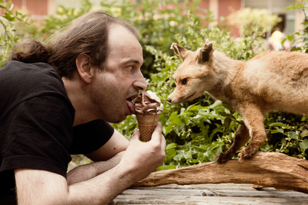 envious: A fox is envious of soft ice cream Stock Photo