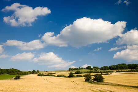 clouded: agriculture summer landscape in front of clouded blue sky Stock Photo