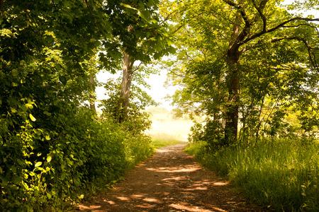 the forest path to Napoleonstein Jena Foto de archivo