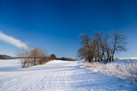melancholia: winter landscape with trees and blue sky