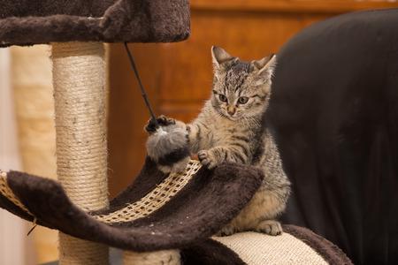 Un pequeño gato que juega en el árbol por arañazo de gato