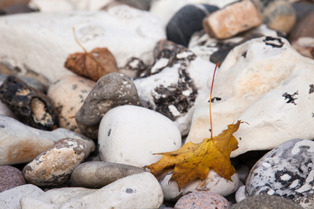 a fall maple leaf on the stones in October