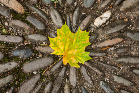 folio: a fall maple leaf on the stones in October
