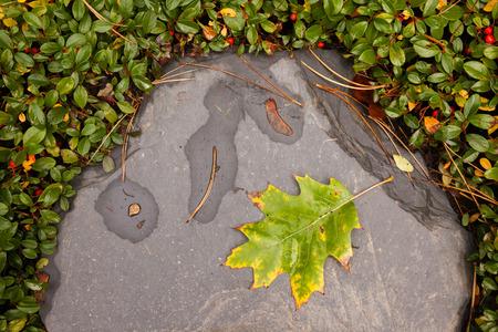 folio: an oak leaf in autumn on a stone Stock Photo