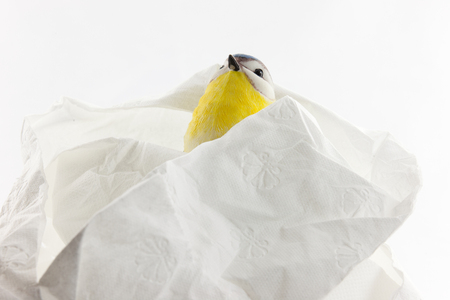 on artificial tit with toilet paper in front of white background