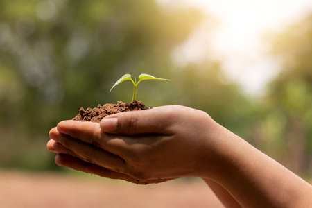 Hand holding growing tree on blurred green nature background and sun light concept about earth day. Stock Photo