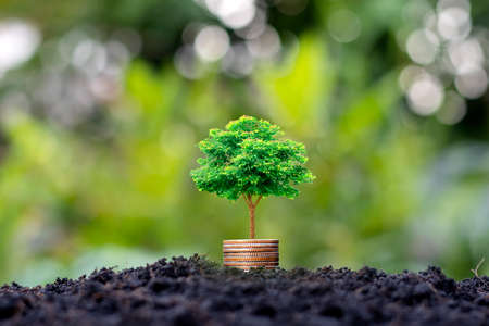 Small trees with green leaves grow on coins or money that overlap naturally with agricultural concepts and sustainable financial growth.
