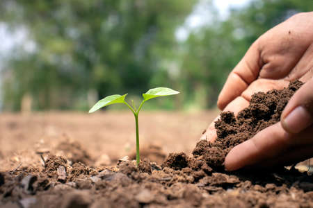 Close-up of a human hand holding a seedling including planting seedlings, Earth Day concept, global warming reduction campaign and managing ecological balance.