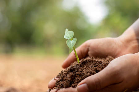 Close-up of a human hand holding a seedling including planting seedlings, Earth Day concept, global warming reduction campaign and managing ecological balance. Reklamní fotografie