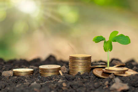 A small tree that grows on a pile of money on the ground. The concept of financial growth and business.