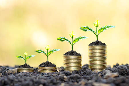 Growing plants on coins stacked on green blurred