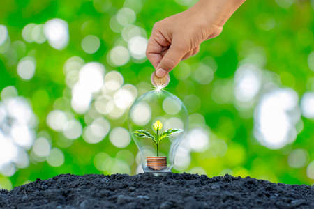 The hands of a man holding a coin and a tree growing on a coin in a light bulb concept saves energy and reduces energy consumption. 免版税图像