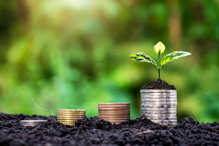 Grow small plants with coins stacked on the ground and money saving ideas.