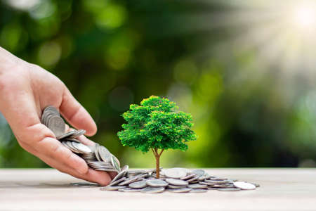 Delivering coins to trees grown on coins, investments and financial concepts. Archivio Fotografico