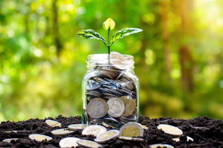 The tree is growing on a jar of money and many coins that are laid on the ground. Standard-Bild