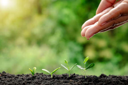 Growing crops on fertile soil and watering plants, including showing stages of plant growth, cropping concepts, and investments for farmers. Stock Photo