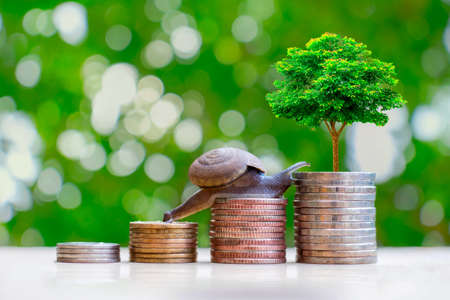 Snails and trees planted on piles of coins, the idea of financial growth and investment.