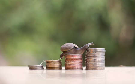 The snail is on the pile of coins.