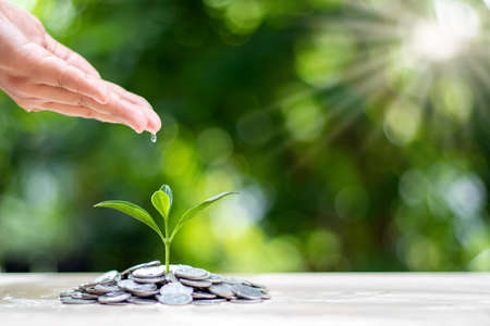 Planting small trees on a pile of coins on a blurred natural green background, money growth concept. Standard-Bild