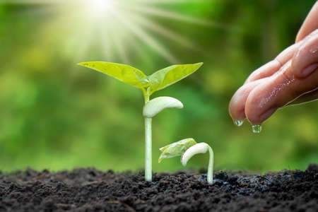 Growing crops on fertile soil and watering plants, including showing stages of plant growth, cropping concepts and investments for farmers. Stock Photo