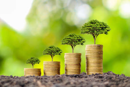 Coin pile with growing tree on top of coin, financial business success idea and money growth. Stock fotó