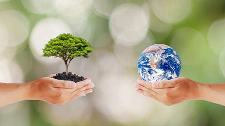 Exchange of planets in human hands with trees in human hands, concept of Earth Day and Maintaining Environmental Balance